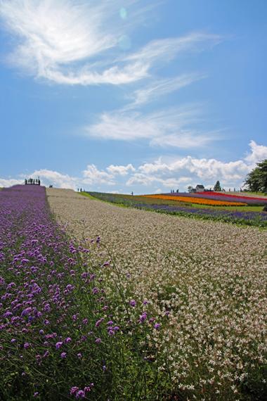 10 お花畑.jpg