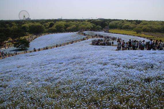 10 みはらしの丘.jpg