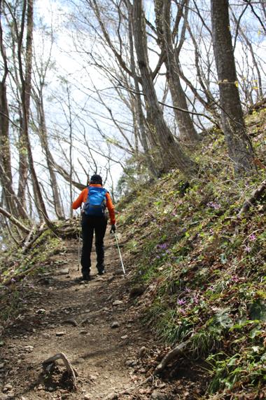 10 カタクリの登山道.jpg