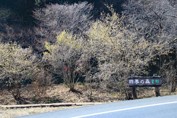 1 四季の森.jpg