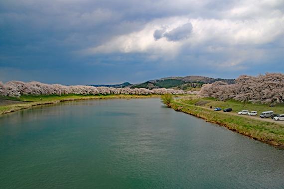 12 一目千本桜.jpg