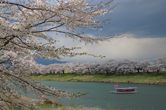 13 一目千本桜.jpg