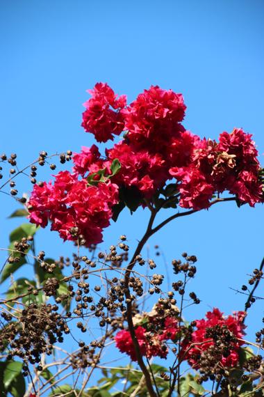 14 花.jpg
