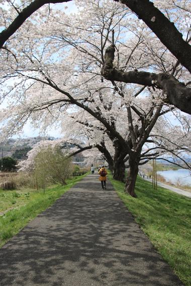 16 一目千本桜.jpg