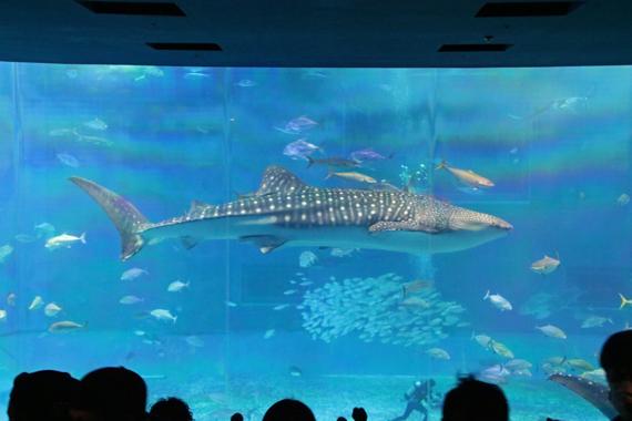 16 美ら海水族館.jpg