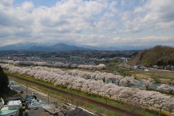 18 一目千本桜.jpg