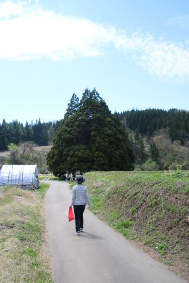 18 小杉の大杉.jpg