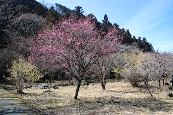 2 四季の森.jpg