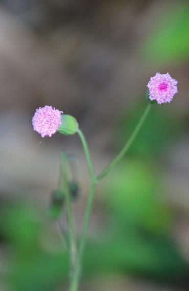 23 花.jpg