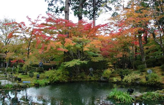7 遠州の庭.jpg