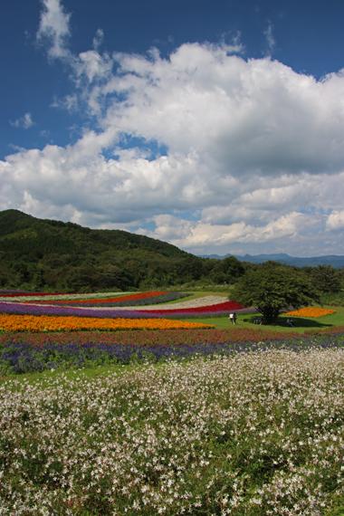 8 お花畑.jpg