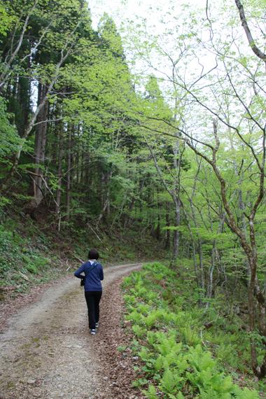 8 林道.jpg