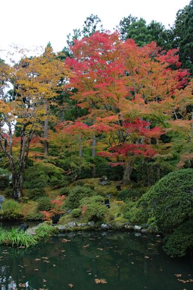 8 遠州の庭.jpg