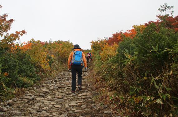 2登山道.jpg