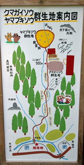 13 クマガイソウ群生地.jpg
