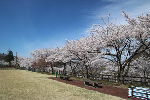 20 南川ダム公園.jpg