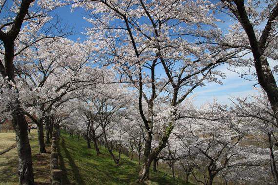 21 南川ダム公園.jpg